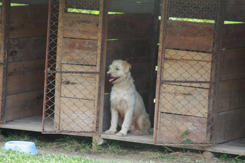 Tasa Municipales recogidas de perros en León
