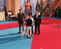 Exposición-Internacinal-de-Perros2